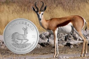 A Springbok Antelope Graces the Reverse of the 2021 1 oz South African Silver Krugerrand